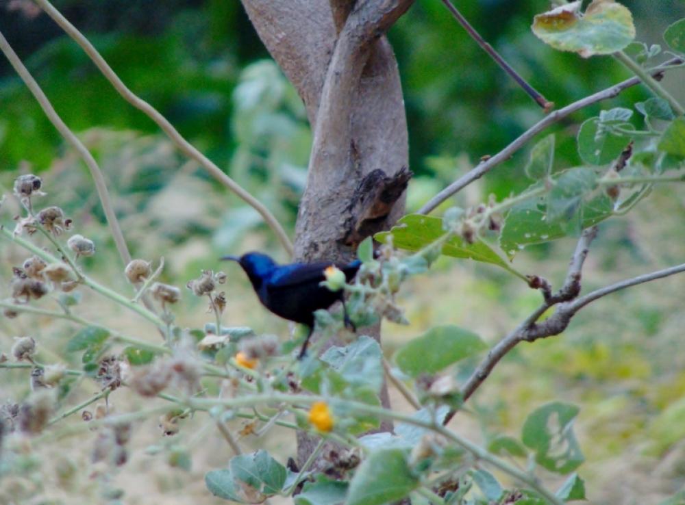 Bird Watch @ SCAD World School
